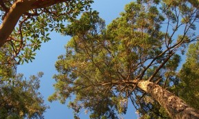 [r]n Reconexión Natural – Un nuevo espacio para disfrutar laNaturaleza